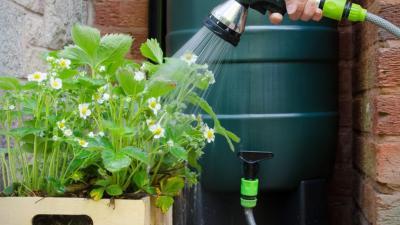 Koop een regenwaterton en krijg een premie -