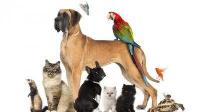 dieren Algemeen -