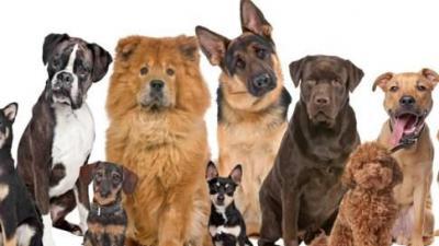 hondenlosloopweiden - rassen